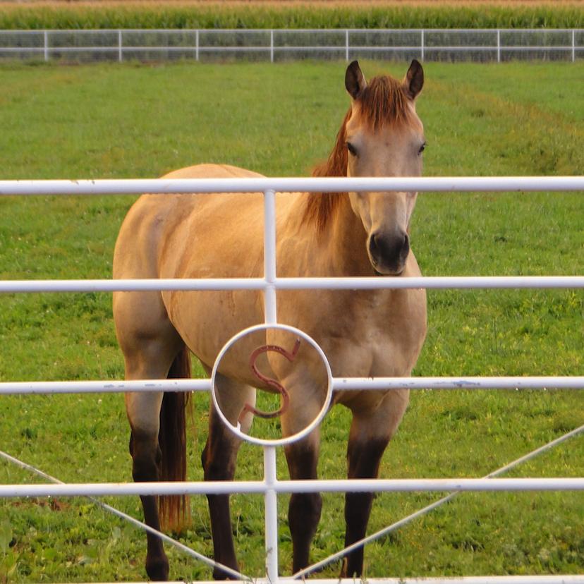 Stratton Horse